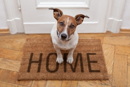 Furry Friend Blues, The Best Ways To Settle Your Pet Into Your New Home