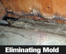 How To Spot And Treat Mold In Your Home