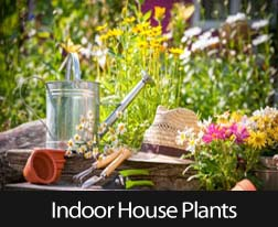 Top 10 Indoor Houseplants For Your Air Quality