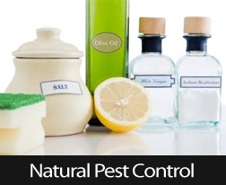 Put An End To Pests Without Using Harsh Chemicals
