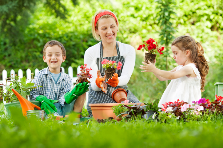 4 tips for home gardening